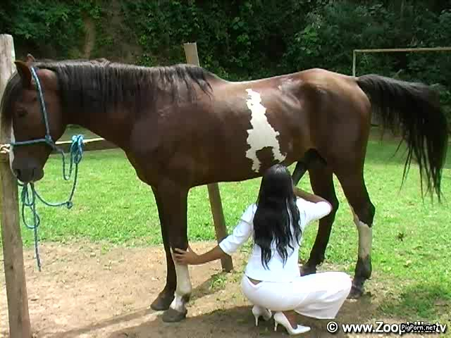 beauties share stallion s big dick