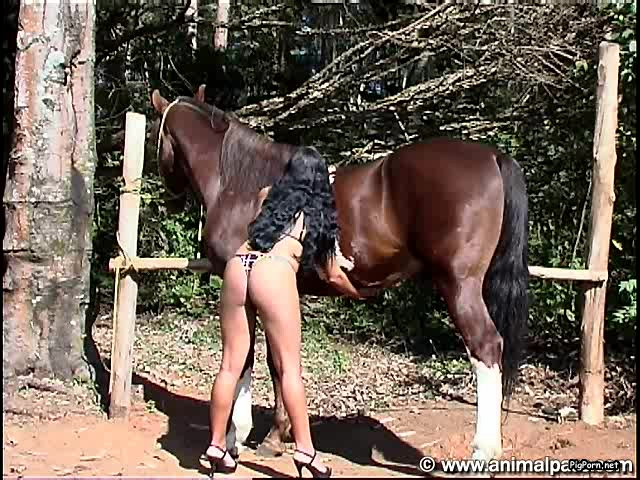 horse cumshot outdoor